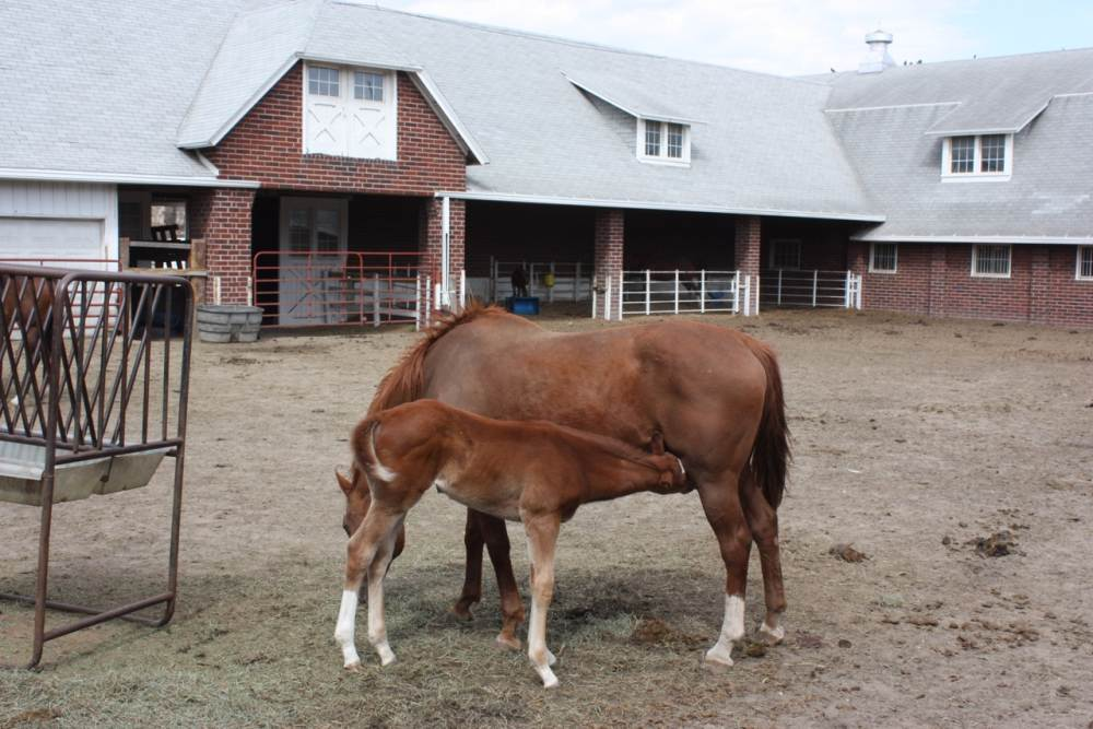 Mare and foal at the Horse barn.